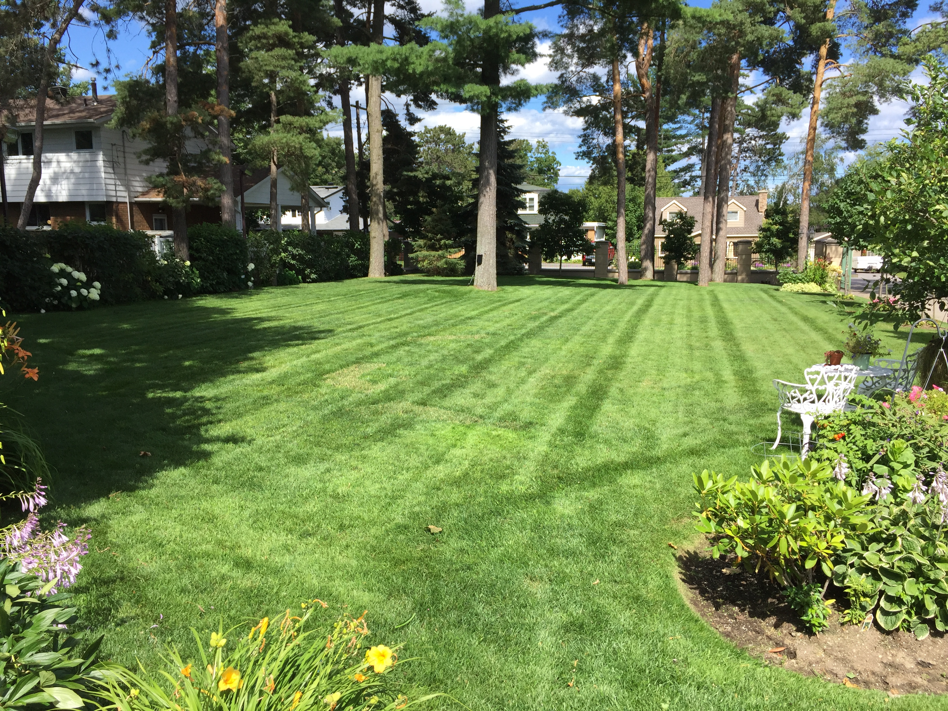 WEEKLY LAWN MAINTENANCE